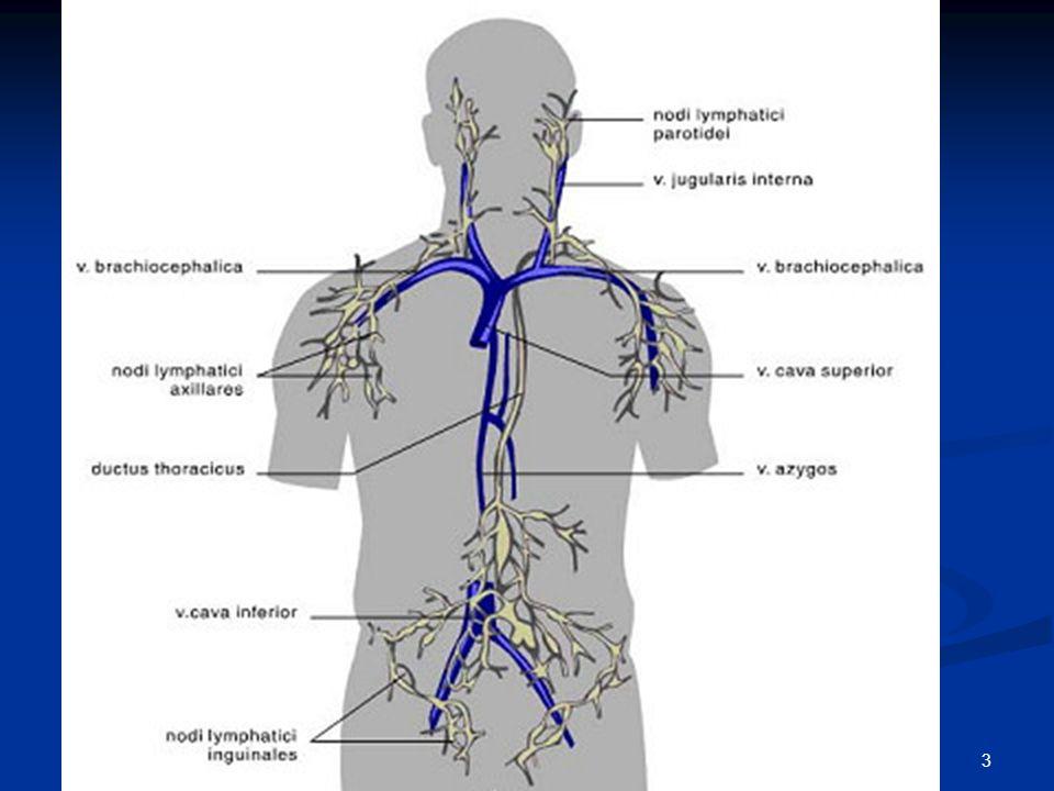 Chirurgie 3 Solide, goed gelokaliseerde tumoren Omliggend weefsel onderzocht op invasie Lymfeknopen (zegt iets over kans op uitzaaiing) Risico afhanke