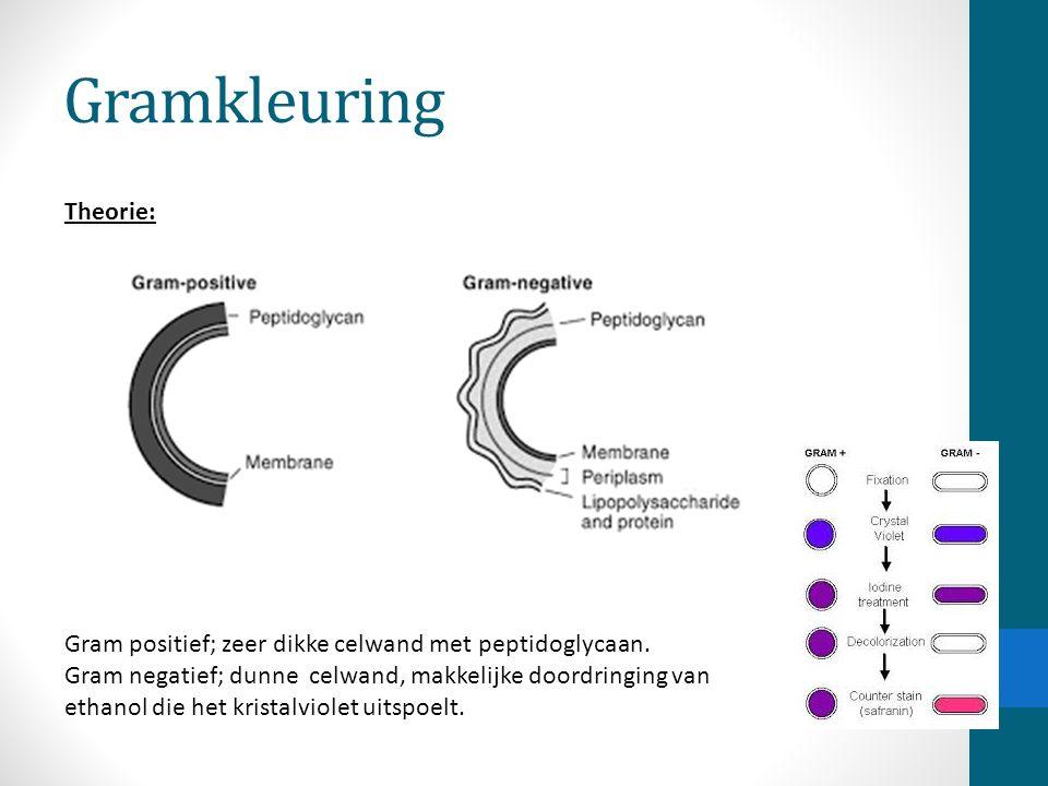 Gramkleuring Gram positief; zeer dikke celwand met peptidoglycaan. Gram negatief; dunne celwand, makkelijke doordringing van ethanol die het kristalvi