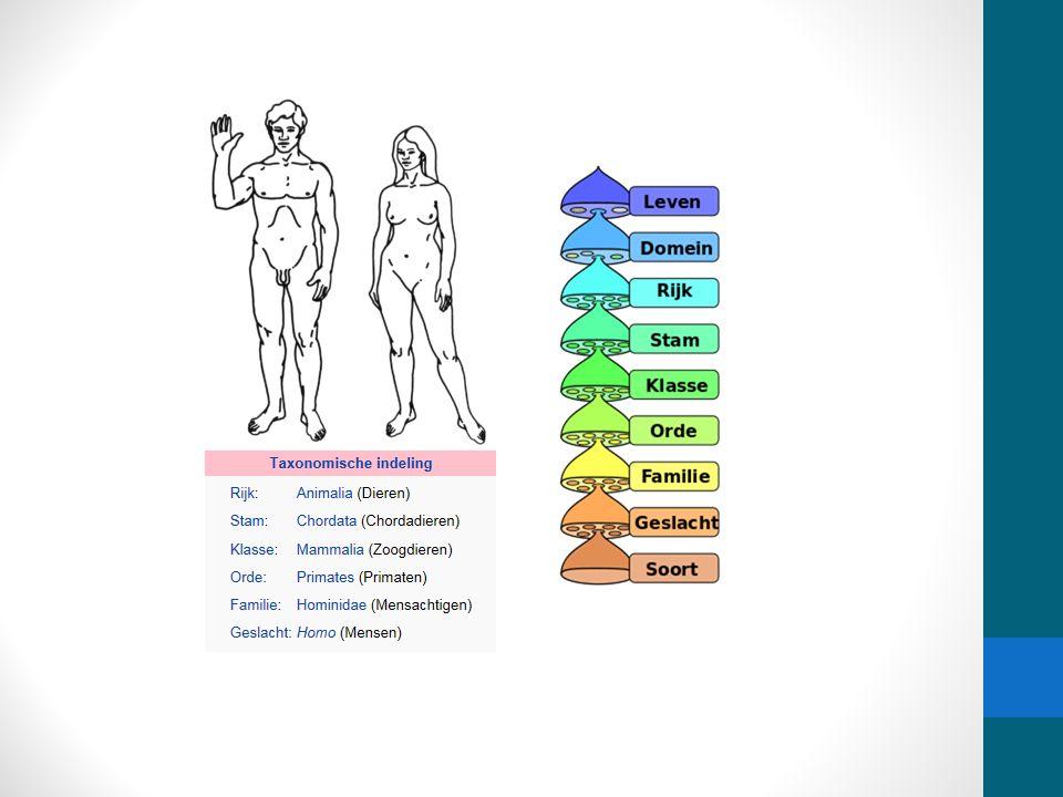 Voeding Nutriënten uit de omgeving (voedingsstoffen) Gebruikt voor metabolisme van de cel (stofwisseling van de cel) Anabolisme Proces dat nutriënten worden opgenomen en als bouwstof gebruikt voor bv cel onderdelen - energie verbruikend proces Katabolisme Proces dat chemische verbindingen verbreekt en de vrijgekomen energie gebruikt als brandstof voor bv groei en beweging (Hoofdstuk 7 celstofwisseling)
