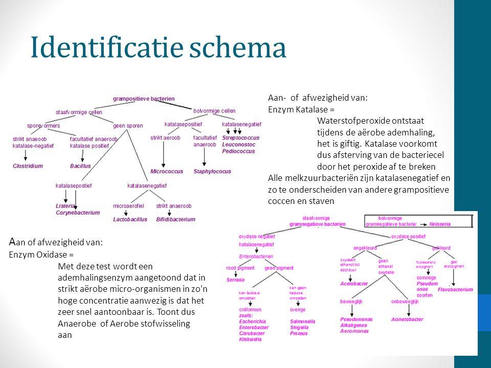 Identificatie schema Aan- of afwezigheid van: Enzym Katalase = Waterstofperoxide ontstaat tijdens de aërobe ademhaling, het is giftig. Katalase voorko