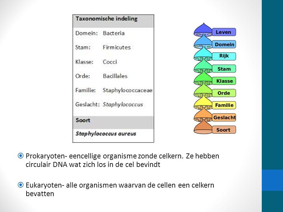 Onderscheid naar vorm Naamgeving: A- bacillen B- streptokokken C- stafylokokken D- Diplokokken E- Spirillen F- Vibrionen