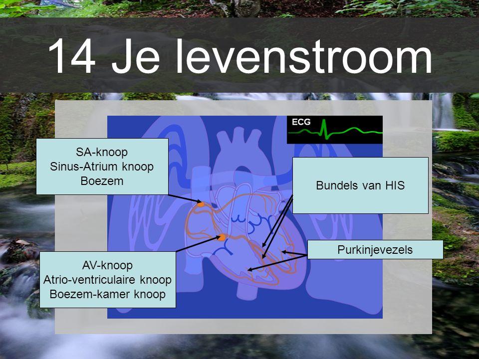 14 Je levenstroom SA-knoop Sinus-Atrium knoop Boezem AV-knoop Atrio-ventriculaire knoop Boezem-kamer knoop Bundels van HIS Purkinjevezels