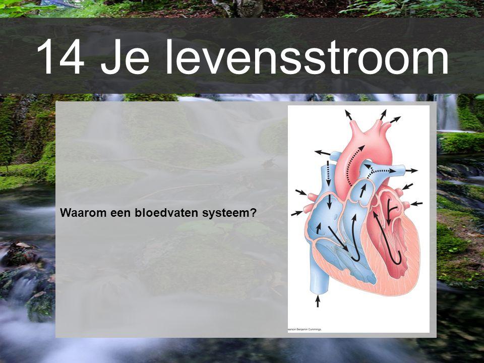 Waarom een bloedvaten systeem? 14 Je levensstroom