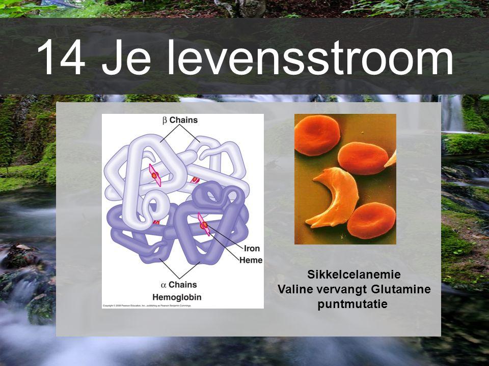 14 Je levensstroom Sikkelcelanemie Valine vervangt Glutamine puntmutatie