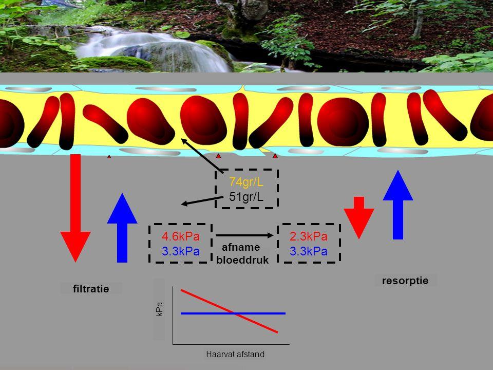 4.6kPa 3.3kPa 2.3kPa 3.3kPa 74gr/L 51gr/L Haarvat afstand kPa filtratie resorptie afname bloeddruk