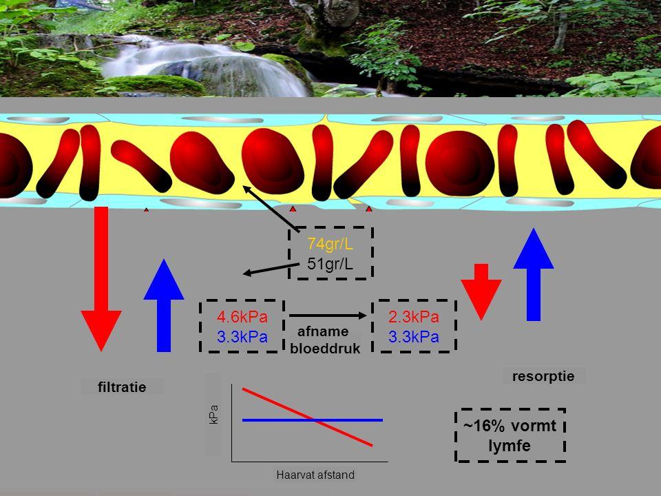 4.6kPa 3.3kPa 2.3kPa 3.3kPa 74gr/L 51gr/L Haarvat afstand kPa filtratie resorptie afname bloeddruk ~16% vormt lymfe