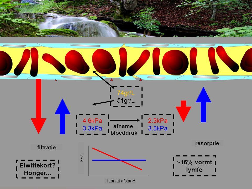 4.6kPa 3.3kPa 2.3kPa 3.3kPa 74gr/L 51gr/L Haarvat afstand kPa filtratie resorptie afname bloeddruk ~16% vormt lymfe Eiwittekort? Honger...
