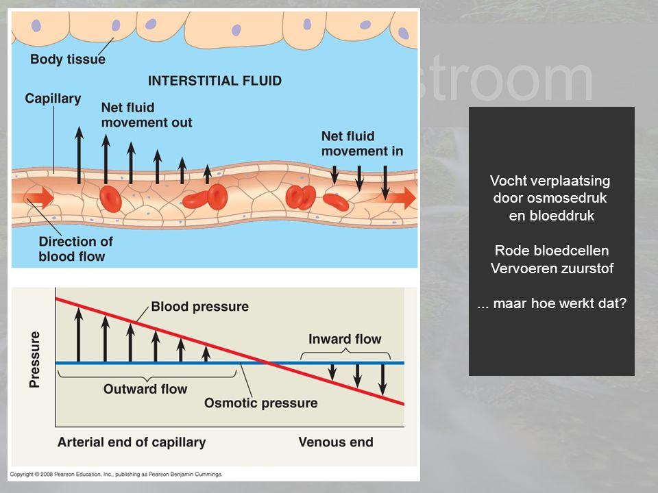 14 Je levenstroom Vocht verplaatsing door osmosedruk en bloeddruk Rode bloedcellen Vervoeren zuurstof... maar hoe werkt dat?