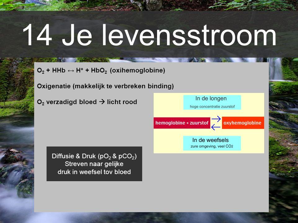 14 Je levensstroom O 2 + HHb ↔ H + + HbO 2 (oxihemoglobine) Oxigenatie (makkelijk te verbreken binding) O 2 verzadigd bloed  licht rood Diffusie & Dr