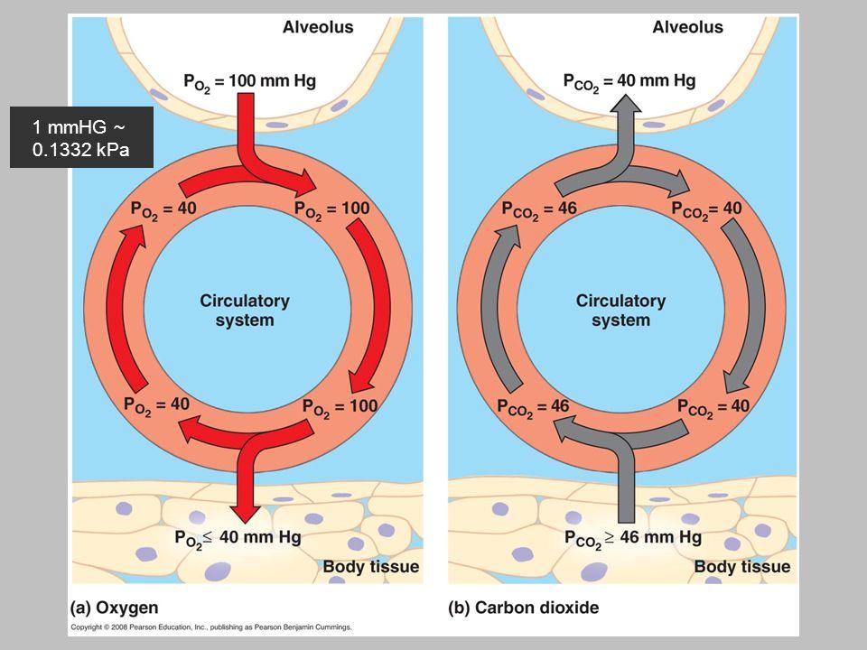 14 Je levenstroom Zuurstof druk daalt per 1000 meter ongeveer met 2 kPa 1 mmHG ~ 0.1332 kPa
