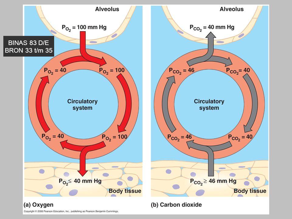 14 Je levenstroom Zuurstof druk daalt per 1000 meter ongeveer met 2 kPa BINAS 83 D/E BRON 33 t/m 35