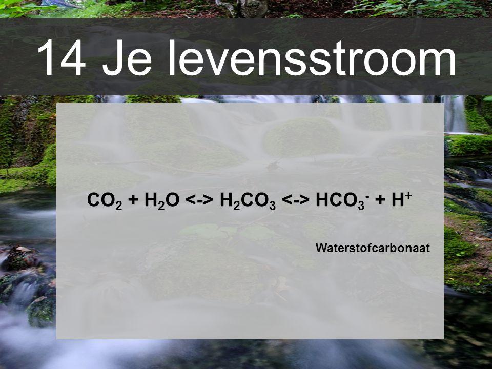 14 Je levensstroom CO 2 + H 2 O H 2 CO 3 HCO 3 - + H + Waterstofcarbonaat