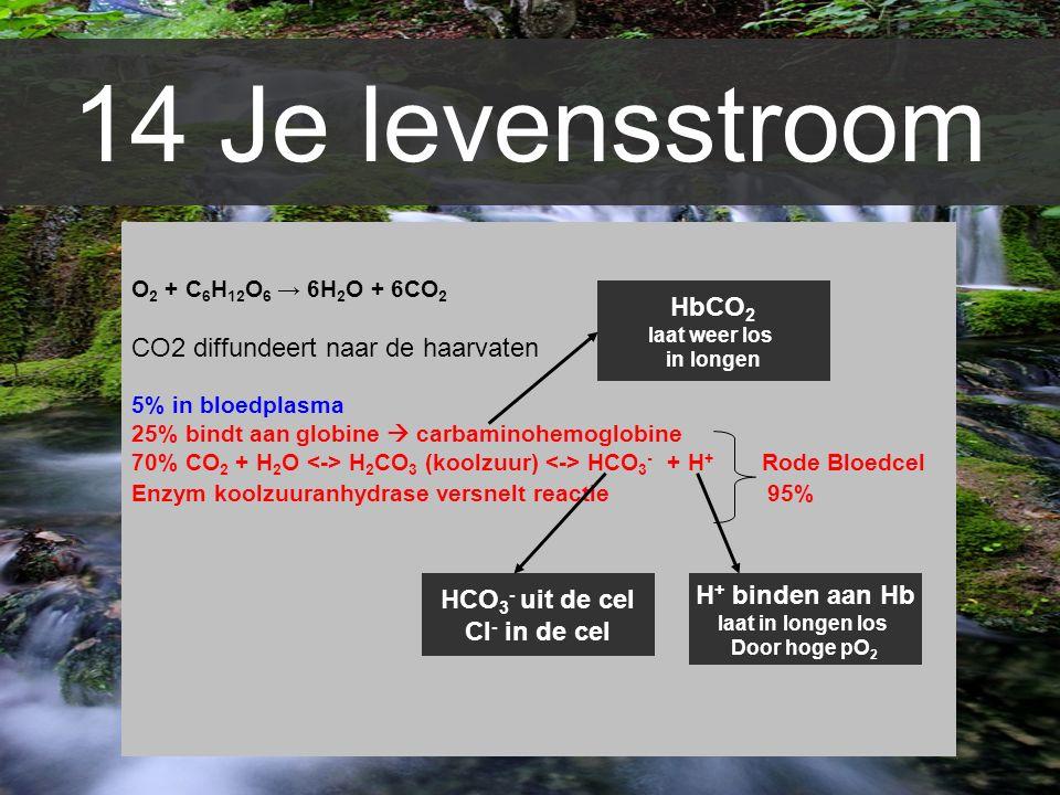 14 Je levensstroom O 2 + C 6 H 12 O 6 → 6H 2 O + 6CO 2 CO2 diffundeert naar de haarvaten 5% in bloedplasma 25% bindt aan globine  carbaminohemoglobin