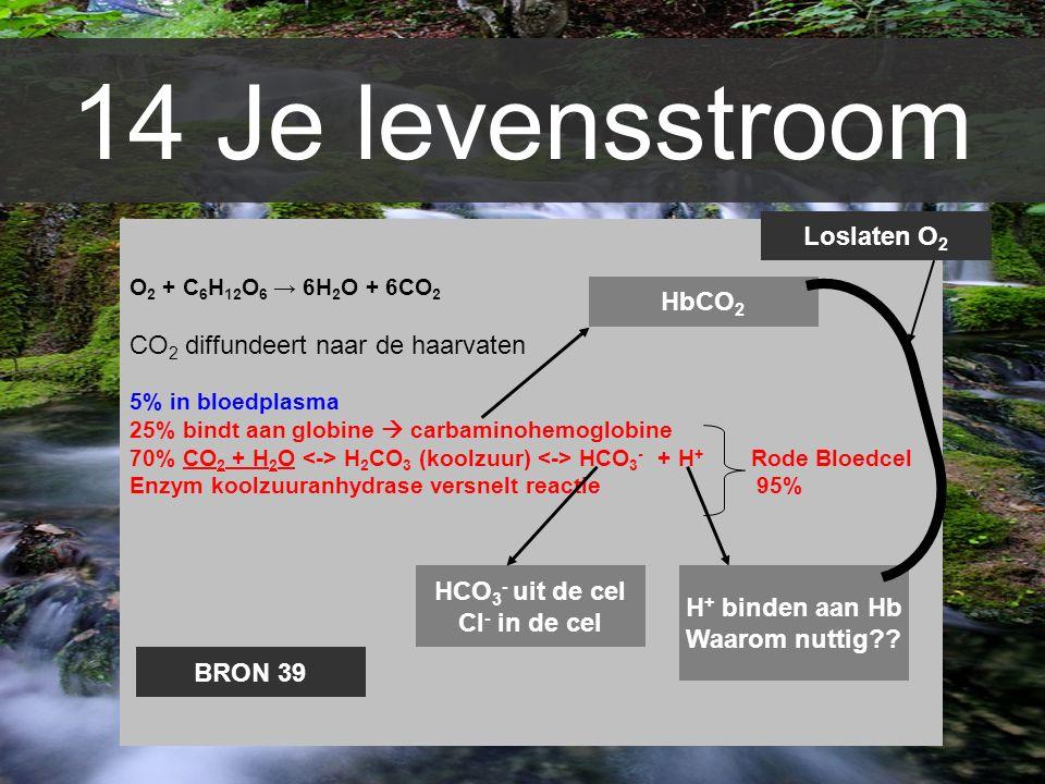14 Je levensstroom O 2 + C 6 H 12 O 6 → 6H 2 O + 6CO 2 CO 2 diffundeert naar de haarvaten 5% in bloedplasma 25% bindt aan globine  carbaminohemoglobi