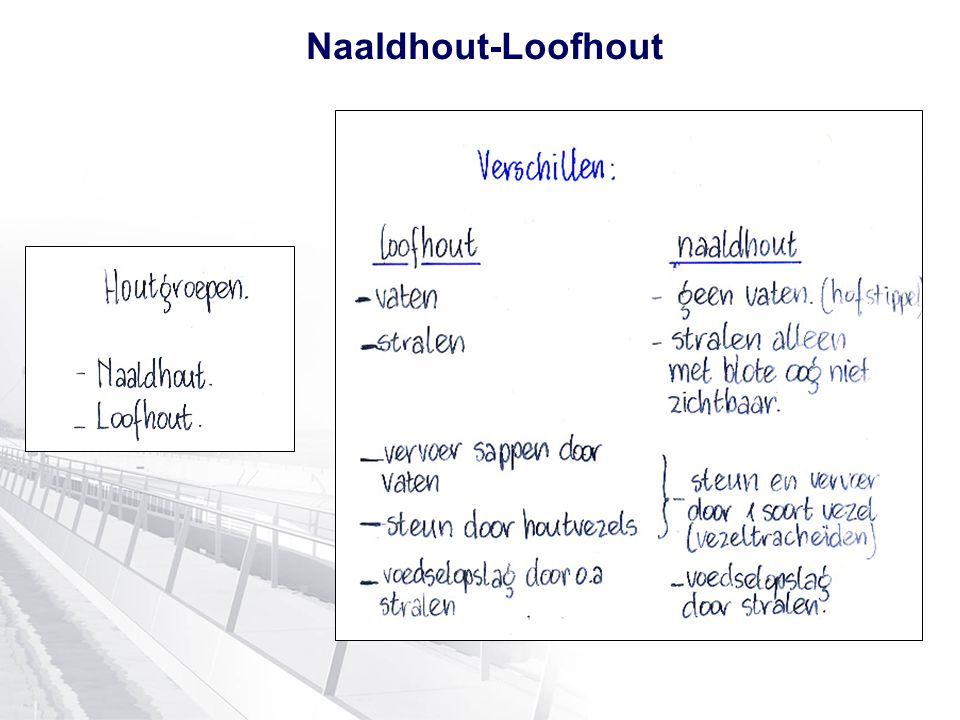 Naaldhout-Loofhout