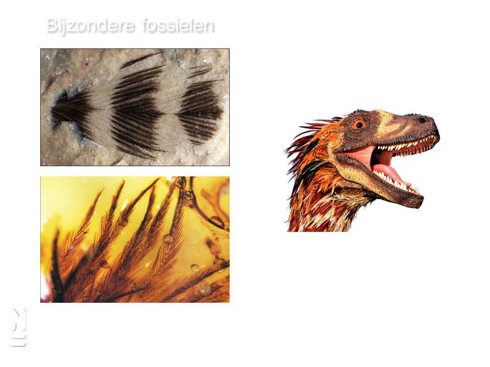 pagina Bijzondere fossielen