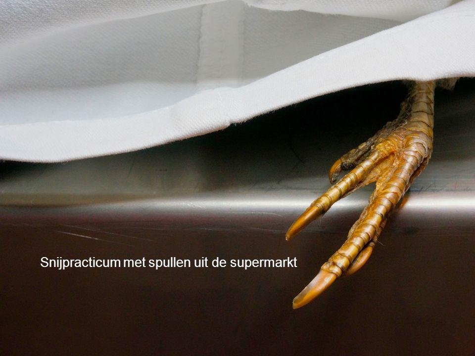 Live: T. rex-autopsie in de klas Snijpracticum met spullen uit de supermarkt
