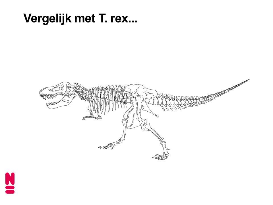 Vergelijk met T. rex...