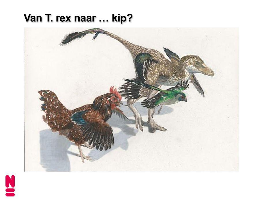 Van T. rex naar … kip?