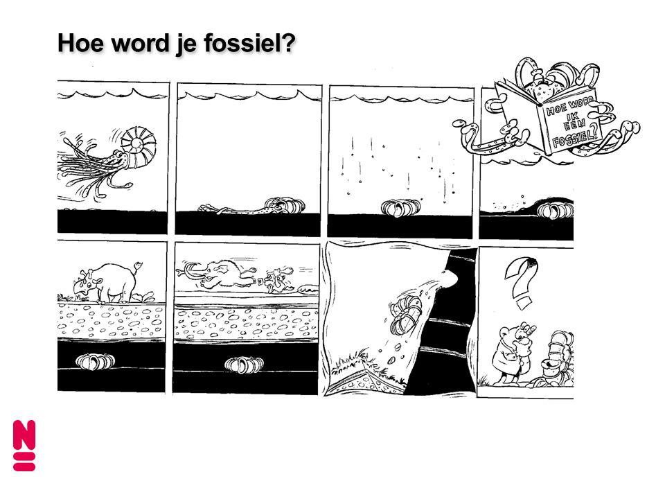 Hoe word je fossiel?