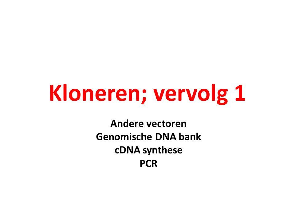 cDNA synthese op eukaryotisch mRNA dwb.unl.edu/.../~dbl0www/ Staff/Croy/cDNAfigs.htm Eukaryotisch mRNA eindigt (bijna) altijd met een poly-A staart DNA polymerase heeft een ds startpunt nodig Als primer kan dan een oligo T primer gebruikt worden Als DNA polymerase wordt een reverse transcriptase gebruikt Er ontstaat een RNA/DNA hybride RT (reverse transcriptase) maakt DNA op RNA maar ook op DNA.