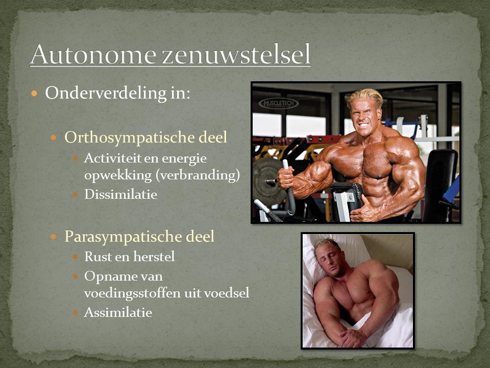 Onderverdeling in: Orthosympatische deel Activiteit en energie opwekking (verbranding) Dissimilatie Parasympatische deel Rust en herstel Opname van vo
