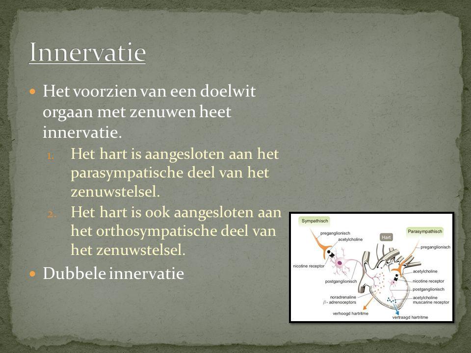 Het voorzien van een doelwit orgaan met zenuwen heet innervatie.