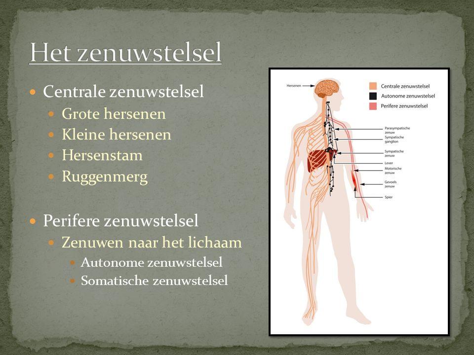 Centrale zenuwstelsel Grote hersenen Kleine hersenen Hersenstam Ruggenmerg Perifere zenuwstelsel Zenuwen naar het lichaam Autonome zenuwstelsel Somatische zenuwstelsel
