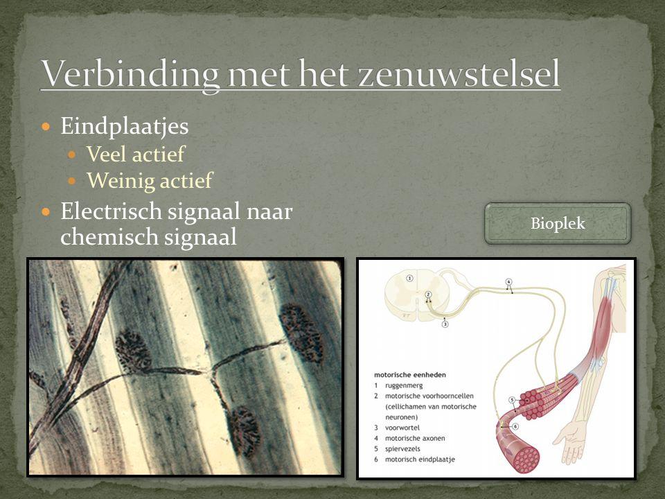 Eindplaatjes Veel actief Weinig actief Electrisch signaal naar chemisch signaal Bioplek