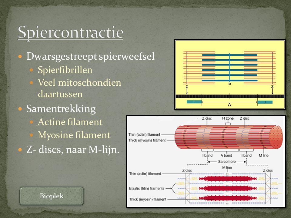 Dwarsgestreept spierweefsel Spierfibrillen Veel mitoschondien daartussen Samentrekking Actine filament Myosine filament Z- discs, naar M-lijn. Bioplek