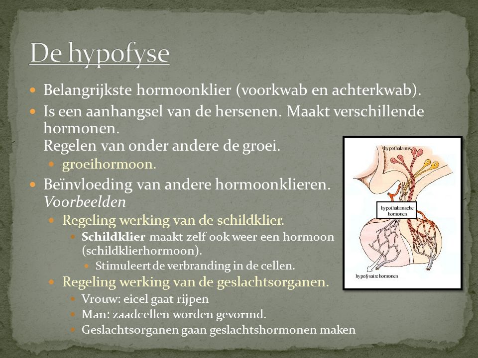 Belangrijkste hormoonklier (voorkwab en achterkwab). Is een aanhangsel van de hersenen. Maakt verschillende hormonen. Regelen van onder andere de groe