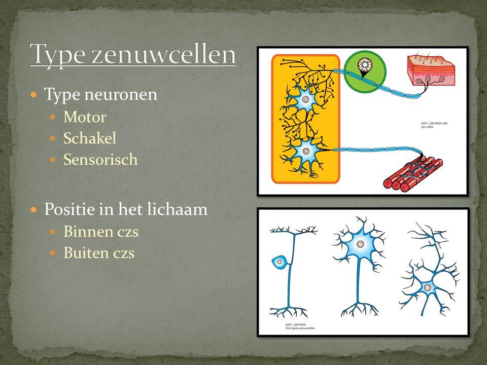 Type neuronen Motor Schakel Sensorisch Positie in het lichaam Binnen czs Buiten czs