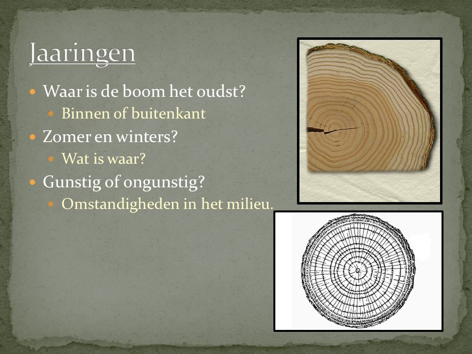 Waar is de boom het oudst? Binnen of buitenkant Zomer en winters? Wat is waar? Gunstig of ongunstig? Omstandigheden in het milieu.