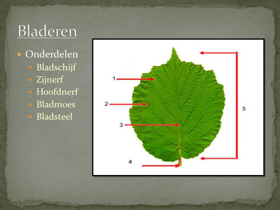 Onderdelen Bladschijf Zijnerf Hoofdnerf Bladmoes Bladsteel
