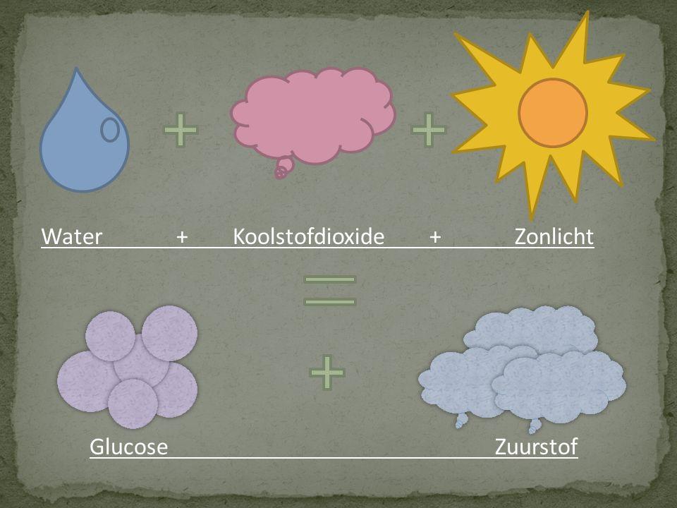 Water+ Koolstofdioxide + Zonlicht Glucose Zuurstof