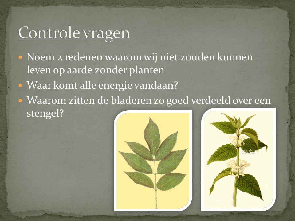 Noem 2 redenen waarom wij niet zouden kunnen leven op aarde zonder planten Waar komt alle energie vandaan? Waarom zitten de bladeren zo goed verdeeld