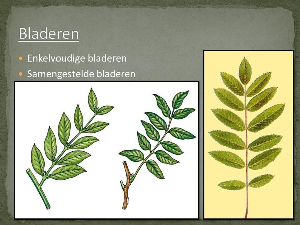 Enkelvoudige bladeren Samengestelde bladeren