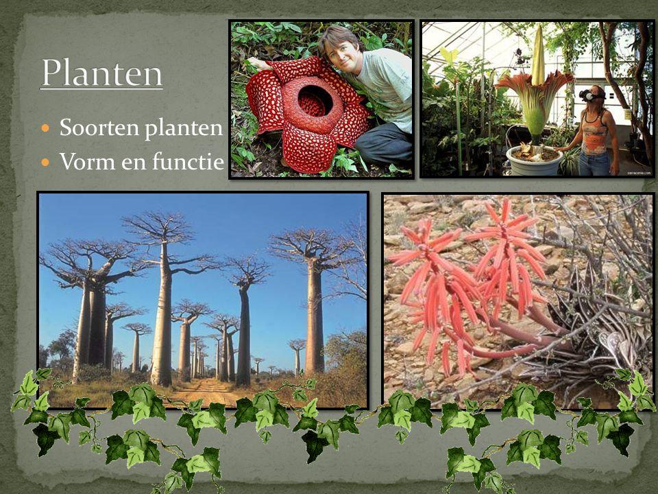 Soorten planten Vorm en functie