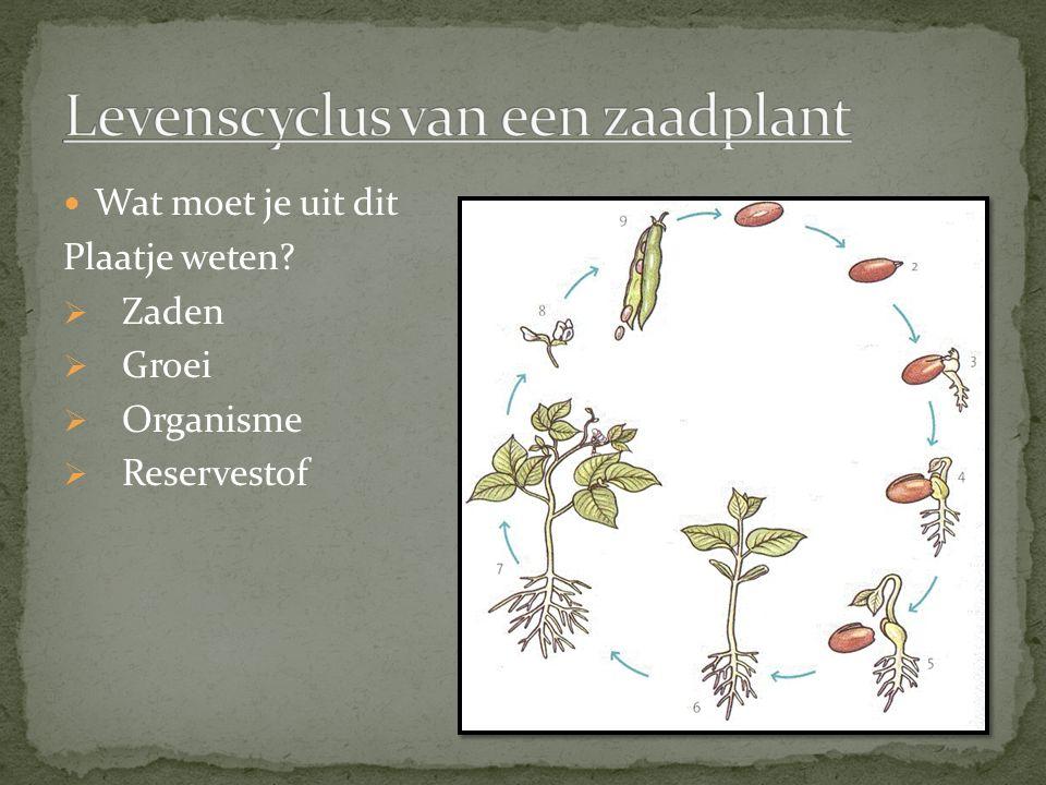 Worteltype Hoofdwortel – Groot en 1x Zijwortel – Kleiner dan hoofdwortel en veel meer.
