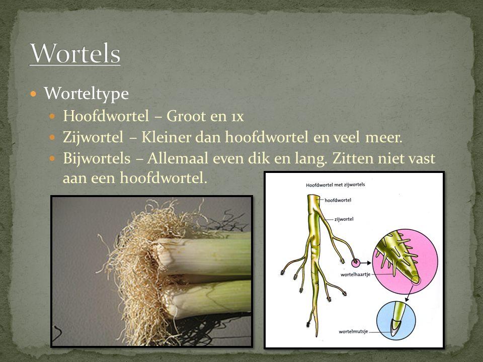 Worteltype Hoofdwortel – Groot en 1x Zijwortel – Kleiner dan hoofdwortel en veel meer. Bijwortels – Allemaal even dik en lang. Zitten niet vast aan ee