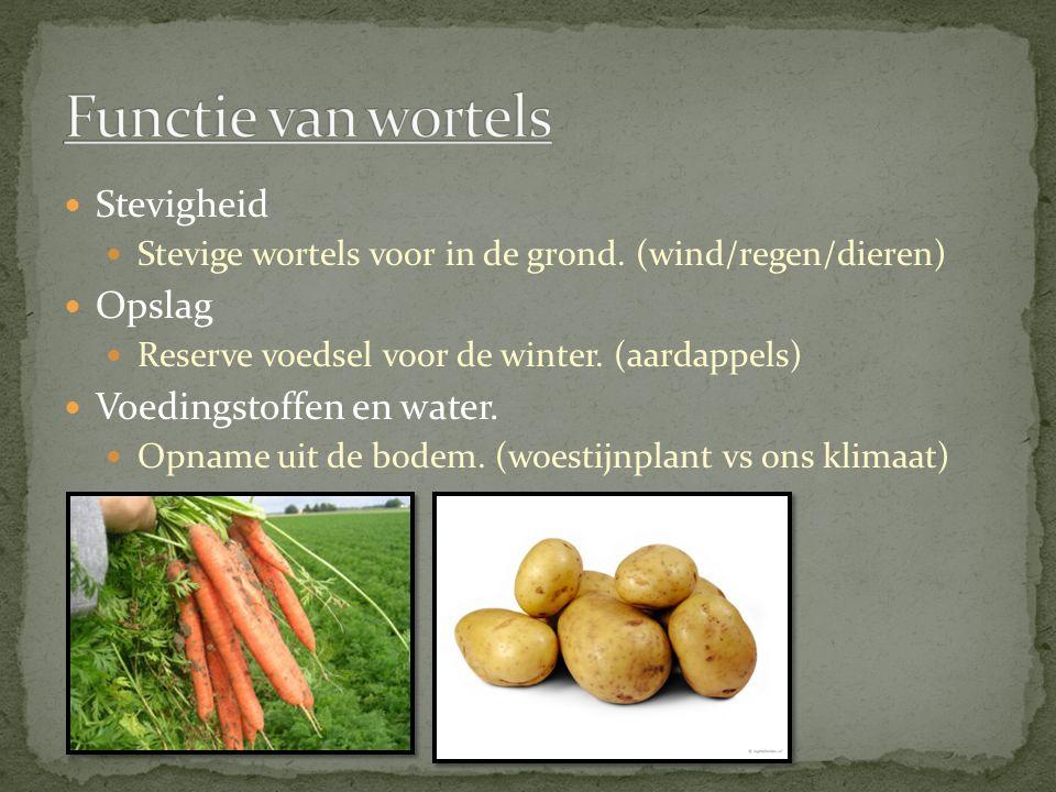 Stevigheid Stevige wortels voor in de grond. (wind/regen/dieren) Opslag Reserve voedsel voor de winter. (aardappels) Voedingstoffen en water. Opname u