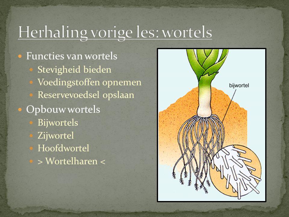 Functies Bloemen en bladeren Onderdelen Knoop Lid (leden) Bladoksel Okselknop Eindknop Hout- achtig of kruid- achtig Hard /zacht Water vasthouden