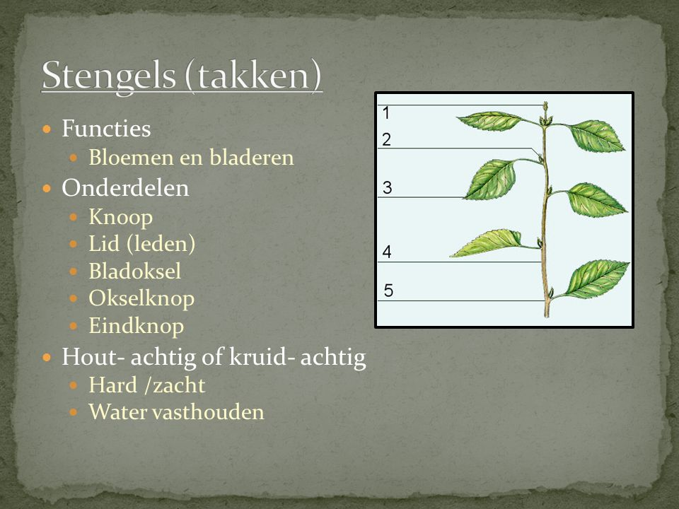 Vervoer van stoffen Wortels Stengels Bladeren