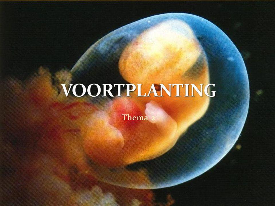 1.Op welke manier zorgt het klompje cellen ervoor dat innesteling in het baarmoederslijmvlies plaatsvindt.