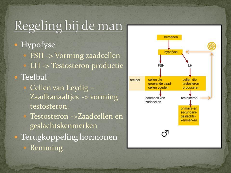 Hypofyse FSH -> Vorming zaadcellen LH -> Testosteron productie Teelbal Cellen van Leydig – Zaadkanaaltjes -> vorming testosteron. Testosteron ->Zaadce