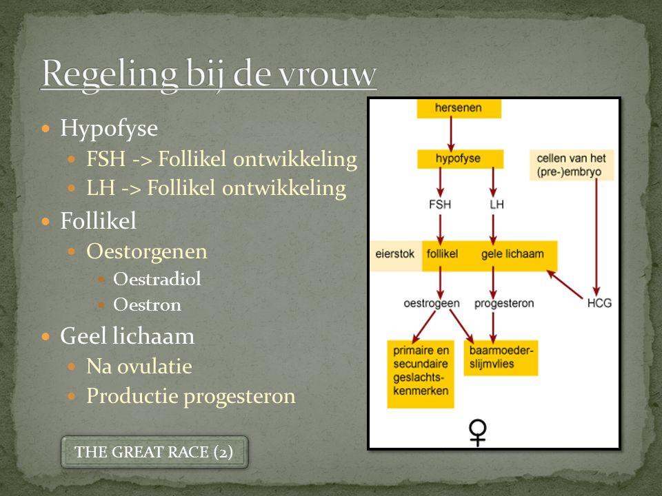 Hypofyse FSH -> Follikel ontwikkeling LH -> Follikel ontwikkeling Follikel Oestorgenen Oestradiol Oestron Geel lichaam Na ovulatie Productie progesteron THE GREAT RACE (2)