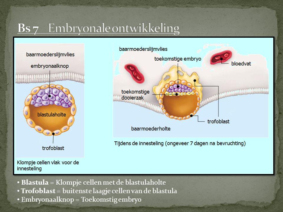 Blastula = Klompje cellen met de blastulaholte Trofoblast = buitenste laagje cellen van de blastula Embryonaalknop = Toekomstig embryo