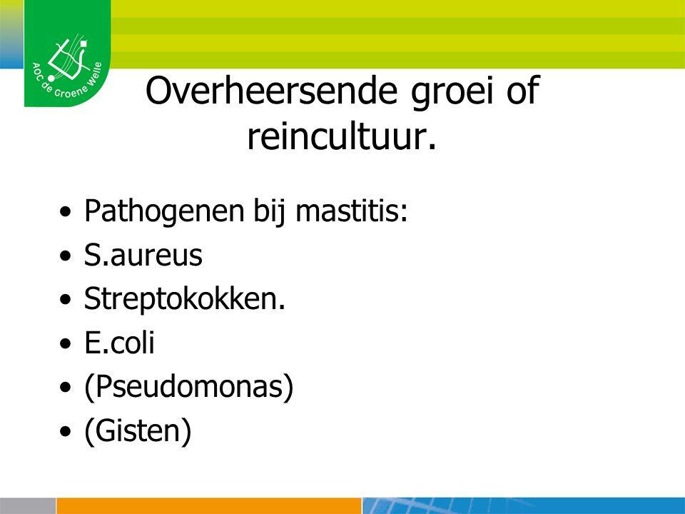 Overheersende groei of reincultuur. Pathogenen bij mastitis: S.aureus Streptokokken. E.coli (Pseudomonas) (Gisten)