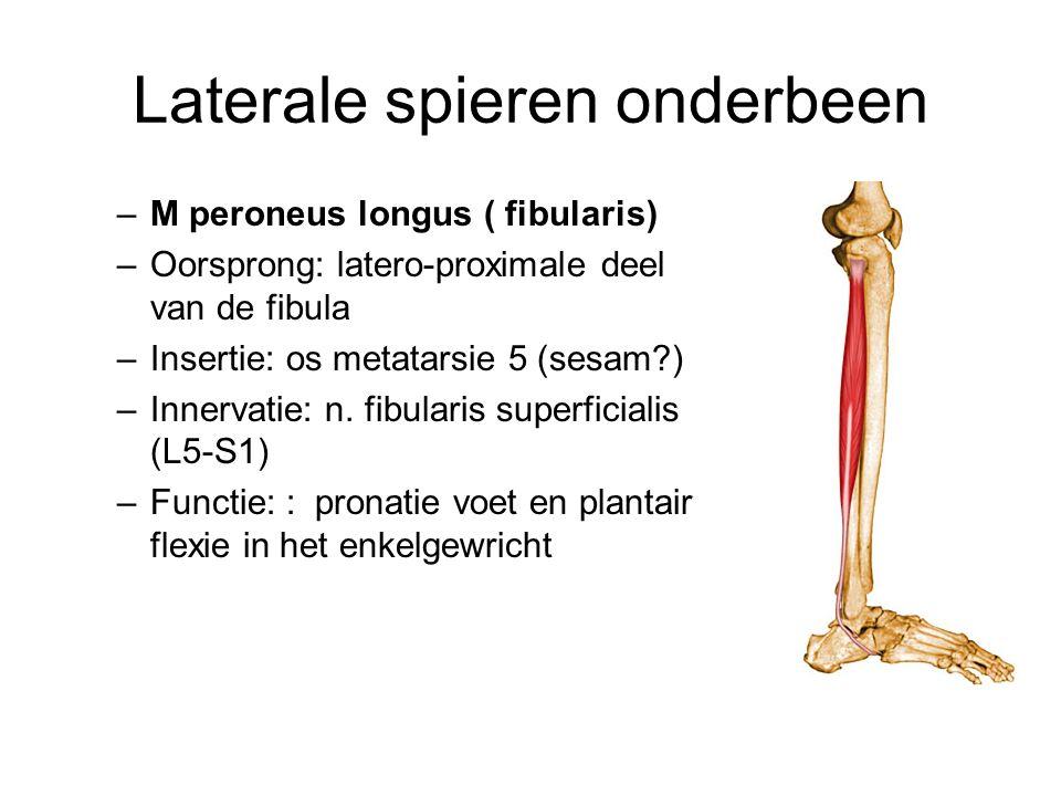 Laterale spieren onderbeen –M peroneus longus ( fibularis) –Oorsprong: latero-proximale deel van de fibula –Insertie: os metatarsie 5 (sesam?) –Innerv