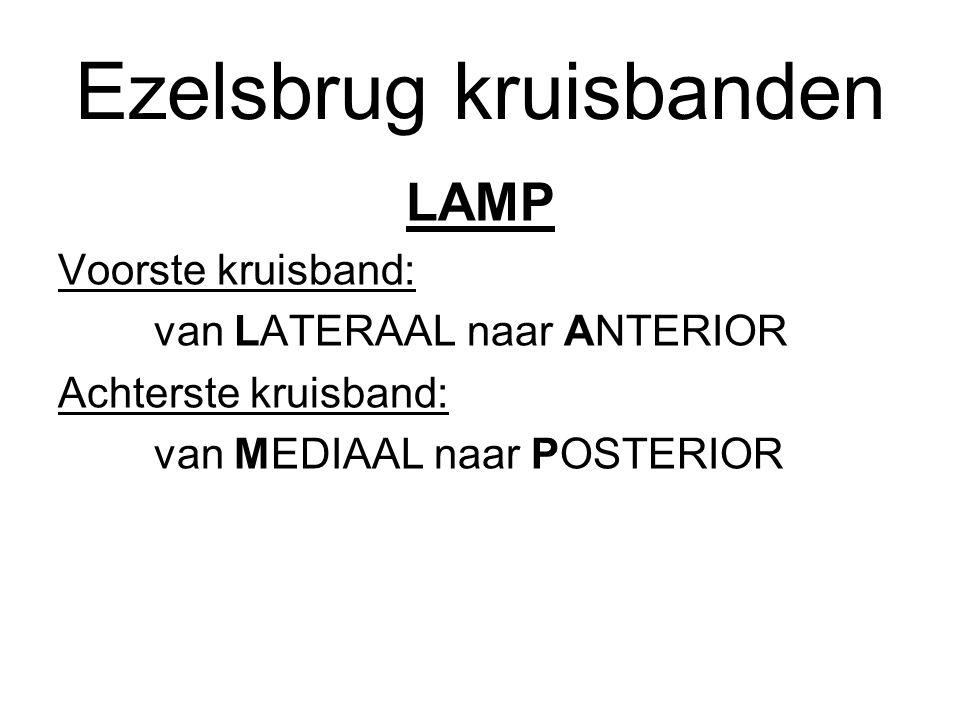 Ezelsbrug kruisbanden LAMP Voorste kruisband: van LATERAAL naar ANTERIOR Achterste kruisband: van MEDIAAL naar POSTERIOR